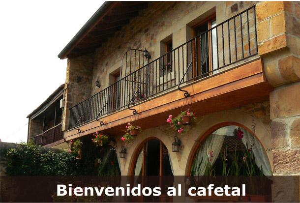 Bienvenidos Al Cafetal De Rumoroso